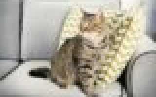 Как избавиться от запаха кошачьей мочи: Полезные советы