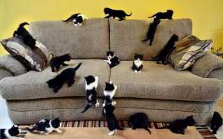 Как избавиться от запаха кошачьей мочи на диване или мягкой мебели в домашних условиях: проверенные и доступные способы
