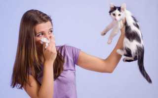 Гипоаллергенные породы кошек: выбор питомца и правила содержания