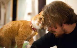 Кот ждет хозяина: почему коты это делают и как предчувствуют их приход