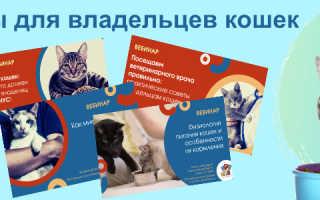 В Подольском районе открывается центр реабилитации бездомных животных