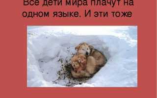 В Подмосковье могут ввести штрафы за брошенных на дачах животных