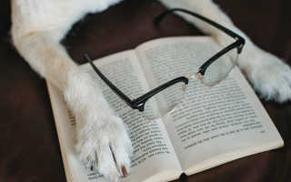 Лучшие породы собак для начинающих собаководов – фото