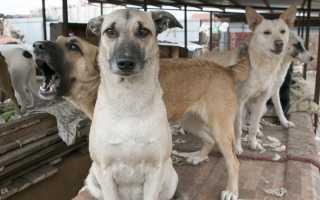 В Думе готовится занопроект, запрещающий изъятие животных за долги