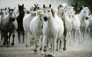 Интересные факты о лошадях: почему их так называют, как они спят и др