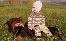 Жизнь собачья: москвичка продала квартиру, чтобы спасать доберманов