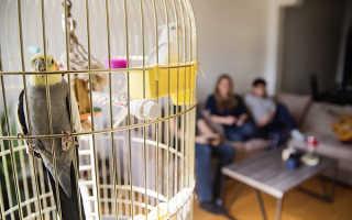 Забавные попытки попугая привлечь внимание совы рассмешили сеть