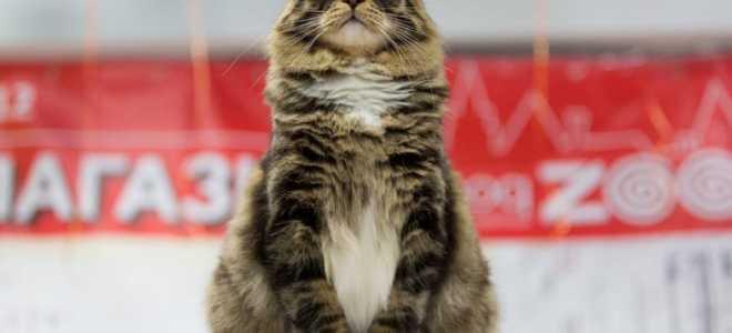 Налог на домашних животных в России: будет ли введен