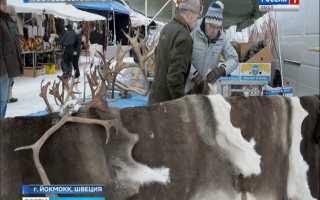 В Швеции обеспокоены участившимися смертями лосей и оленей