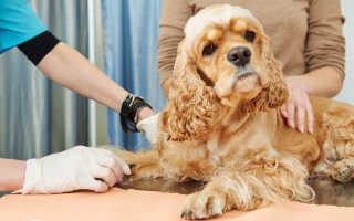 Зачем собаке пятый палец – необходимость или рудимент