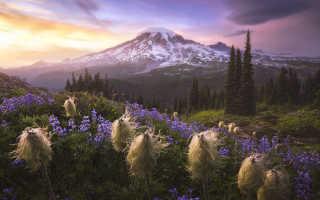 Завершился один из старейших мировых фотоконкурсов, посвященных природе