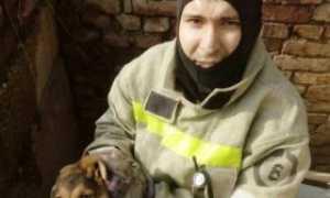 В Перми спасли собаку, застрявшую под бетонной плитой