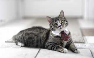 Кот схватил псину за шею и быстро поволок в квартиру
