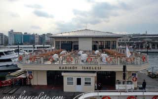 Карликовый бык стал центром внимания на рынке Стамбула