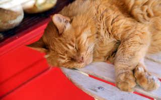 В Волгограде ищут любящих хозяев для носителей кошачьего ВИК Лисы и Арамиса