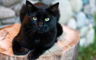 Как назвать котенка девочку: Лучшие идеи для разных пород и окрасов
