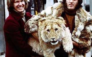 Лев и такса — самая невероятная и трогательная история дружбы