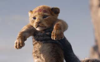 Львенок, который стал прототипом Симбы в новом «Короле Льве»