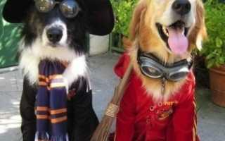 Костюм для собаки на хэллоуин своими руками – лучшие идеи на фото