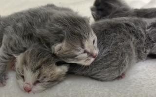 Кошка обнаружила новорождённую девочку и помогла спасти ее