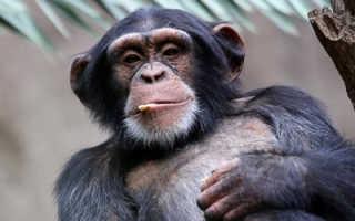 Животные, которые выглядят опасными, а на деле – безобидные милахи