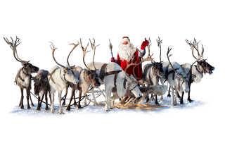 Интересные факты об оленях Санта-Клауса
