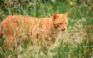 На южном побережье Новой Зеландии будут избавляться от всех котов