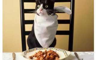 Миски для кошек: Как выбрать посуду для кошачьего стола