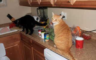 Как отучить кота лазить по столам – самые действенные способы