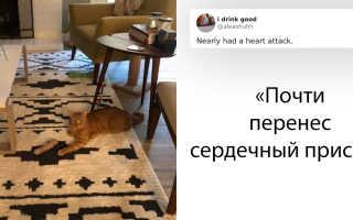 Как домашние животные могут превратить квартиру в ад – фото