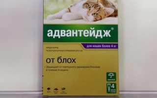 Капли Адвантейдж на холку для кошек: описание, инструкция по применению, противопоказания и побочные эффекты, аналоги, отзывы