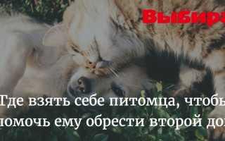 В Уфе котёнка освободили из бетонного плена (ВИДЕО)