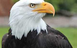 В Казахстане орёл с повреждёнными лапками попросил помощи у людей