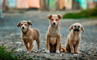 Как помочь приюту для животных