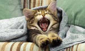 Милые новорожденные котята: лучшие фото