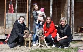 Крымчанка переехала в село, чтобы заботиться о бездомных животных