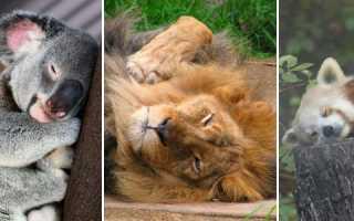 Десятка самых ленивых животных на Земле