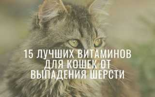 Витамины для кошек от выпадения шерсти: обзор лучших, отзывы