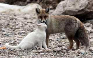 Девушка и её пёс имеют одинаковый недуг, а потому понимают друг друга без малейших проблем