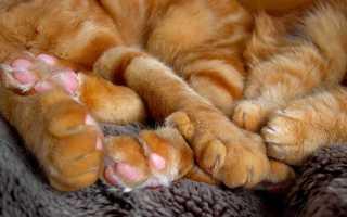 Зачем кошкам нужны подушечки на лапах: ищем ответ