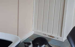 Голубка усыновила маленького бездомного котёнка