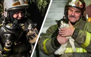 Котёнка, попавшего в западню, спасли пожарные Петрозаводска