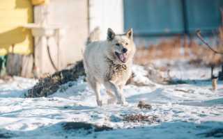 В Комсомольске-на-Амуре спасли собак, привязанных к затопленной будке