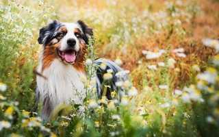 Лучшие породы собак в мире — топ-10 самых идеальных