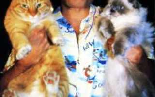 Кошки Фредди Меркьюри при жизни и после его смерти: интересные факты