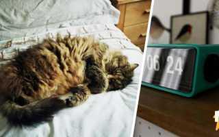 Кот научился выключать будильник, заботясь о спокойном сне хозяйки