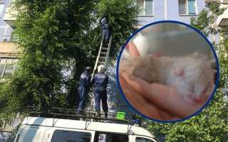 Брутальный пожарный спас котенка и не смог сдержать слез