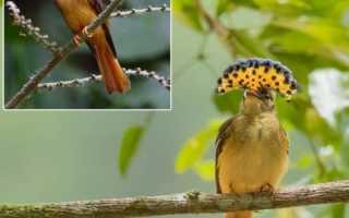 7 самых необычных и экзотических птиц в мире