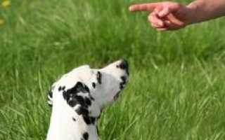 Как нельзя гладить собаку: запретные приемы для вашего пса