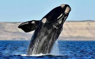 Морской лев в пасти кита: фото